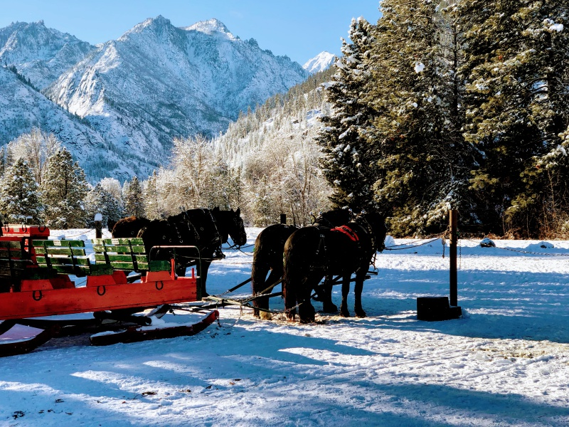 PIcture of winter sleigh rides in Icicle